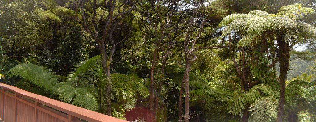 Auckland Rainforest